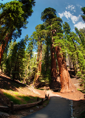 Sequoia National Park 17
