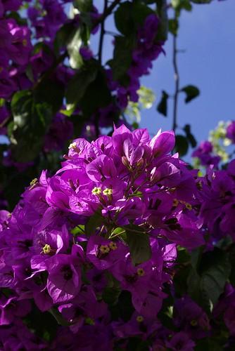 http://farm5.static.flickr.com/4137/4850244805_fd426fd6dd.jpg