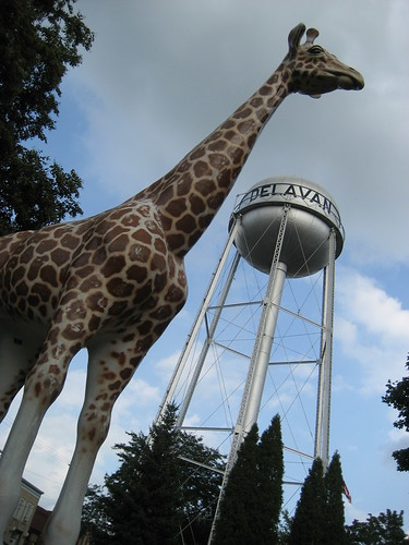 OT Delavan giraffe