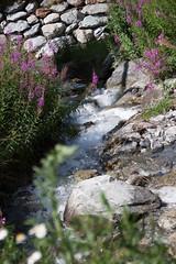 IMG_2578 (kintoc) Tags: canon de eos la sigma savoie 1770 parc haute maurienne 500d vanoise f2845