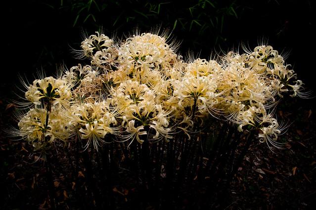 untitled,flower