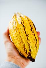 Fresh Cacao from São Tomé & Príncipe (EverJean) Tags: beans bars chocolate harvest fresh crop pulp cocoa pods reviews origin principe saotome cacao sãotomé forastero sãotoméandpríncipe imkedielen sãotomépríncipe choqoa wwwchoqoacom amelonado misshelenaprincipesaotomesãotomésãotomépríncipeamelonadobarsbeanscacaochocolatechoqoacocoacropforasterofreshharvestoriginpodspulpreviewswwwchoqoacom