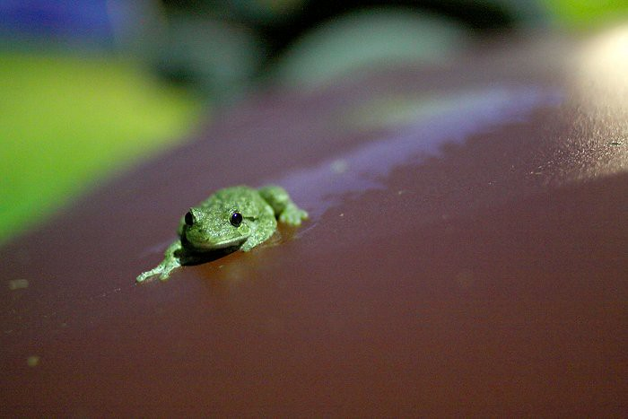 08-06-frog