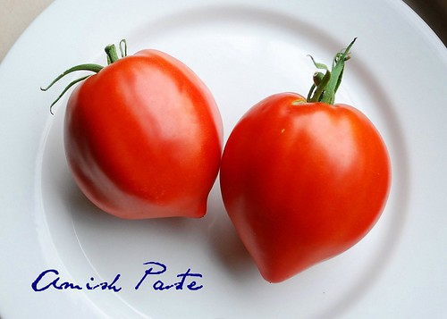 Amish Paste Tomatoes