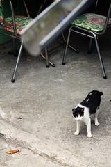 IMG_0510 (翔志) Tags: taiwan taipei 台灣 台北 貓 taipeicounty 台北縣 侯硐 houtong 猴硐 瑞芳鎮 貓村 catvillage rueifangtownship houtongcatstreet 百貓街