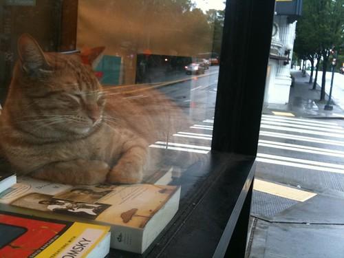 シアトルの本屋さんの猫