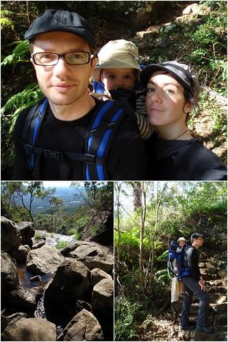 Tamborine forest