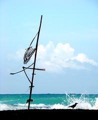 Galle, Sri Lanka (expatty) Tags: ocean deleteme5 deleteme8 deleteme deleteme2 deleteme3 deleteme4 deleteme6 bird deleteme9 deleteme7 beach fishing saveme deleteme10 tide platform sri lanka