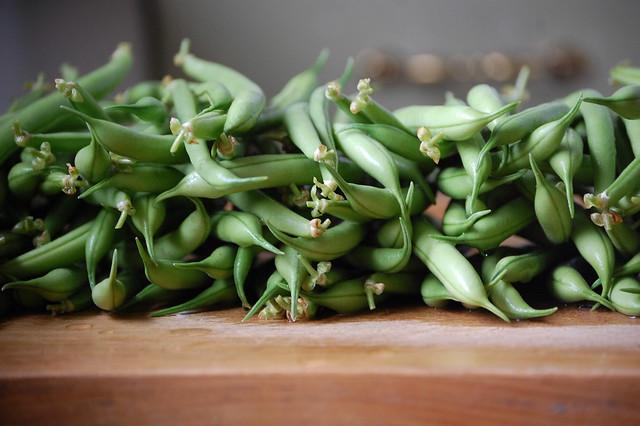bean harvest
