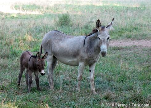 Baby Donkey 1