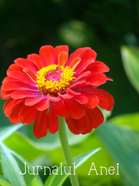 floare din orasul meu