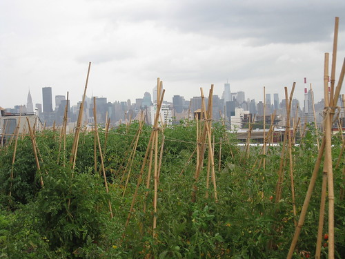 Student club outing to: Bklyn Grange Rooftop Farm