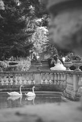 Spettatori romantici. (dudu62) Tags: bn fontana abruzzo chieti sposi cigni lanciano villacomunale lens55200 bellabruzzo