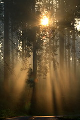 Light-flo... (rolfspicture) Tags: morning trees nature misty fog forest sunrise landscape shadows outdoor ligt rays sauerland