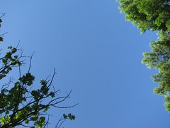 Cielo (cepatri55) Tags: summer sky tree estate piscina swimmingpool agosto cielo albero 2010 ferragosto cepatri cepatri55