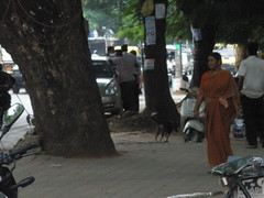 Street Dog Running Away