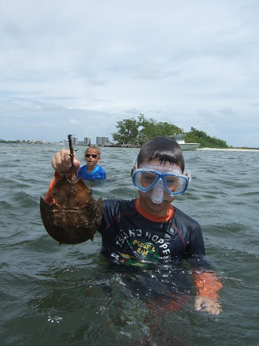 Joseph finds a horshoe crab