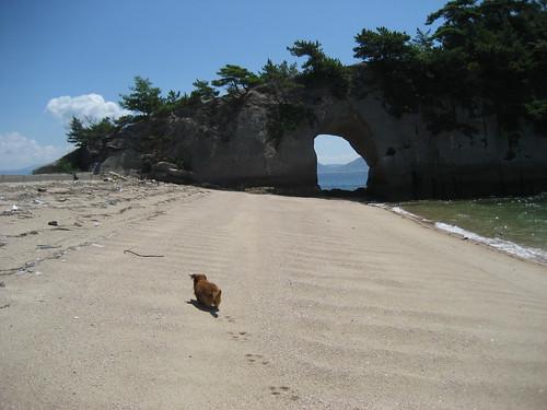 江ノ島 メタボ犬もはしゃぐ