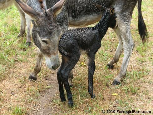 Esmeralda's Baby Boy 10
