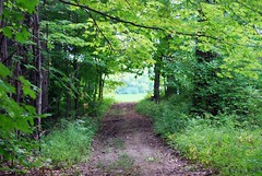 Finn Park (blmiers2) Tags: park trees newyork nature nikon parks trails trail treescape finnpark d40x blm18 blmiers2