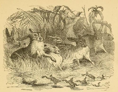 Lepores et Ranae