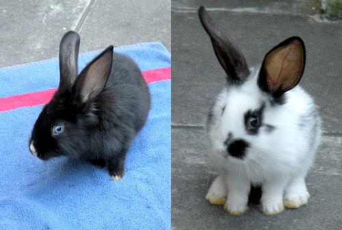 Sunny und Bunny