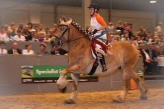 DSC_5063-578 (Ton van der Weerden) Tags: horses horse de cheval van der nederlands belges ton draft 2010 shertogenbosch chevaux tentoonstelling nationale someren belgisch trait trekpaard trekpaarden weerden nationaletentoonstelling2010