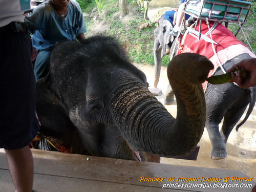 Elephant Trekking & Safari 14