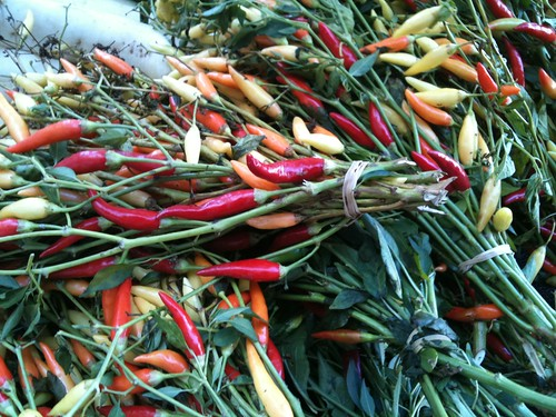 Hollywood Farmers Market: chili peppers