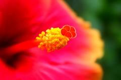 Be Thankful (TON70) Tags: flower closeup hibiscus gumamela