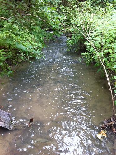 Centennial Brook