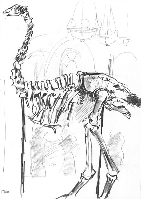 Moa skeleton at Bristol museum