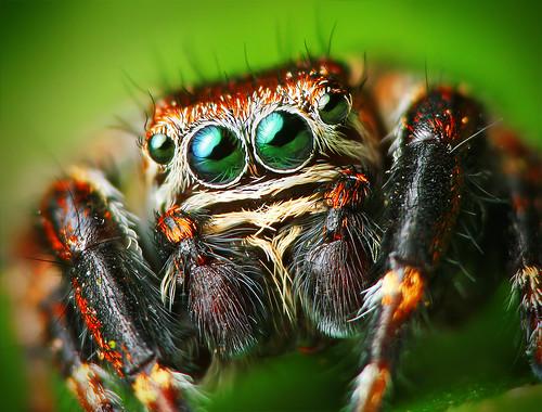 フリー写真素材, 動物, 陸上生物(その他), 蜘蛛・クモ,