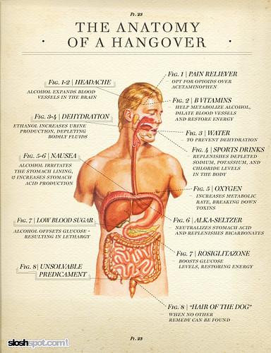 hangover-anatomy-1