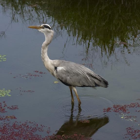 Bird, Fukuoka Japan