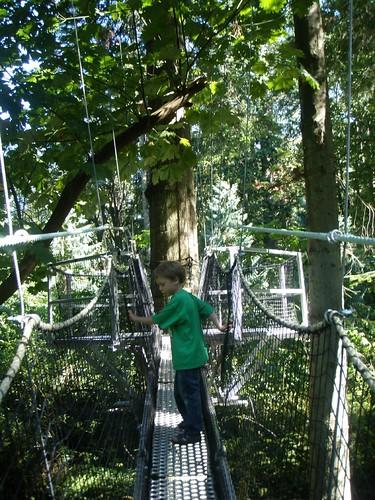 aerial walkway exploring