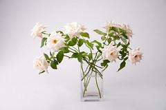 Garden Roses (evaritchie99) Tags: pink glass vase bouquet arrangement gardenroses