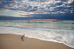 (Pawel Papis Photography) Tags: ocean sky seascape beach water clouds sunrise sand branch wave foam simplicity swimmer rays dri surfersparadise goldcoast pawel