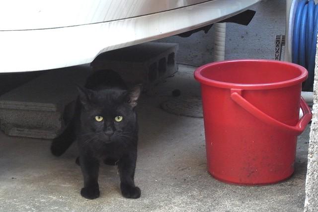 Today's Cat@2010-09-03