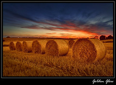 Golden Glow (Alan10eden) Tags: sunset barley straw northernireland bales colorphotoaward photosandcalendar newgoldenseal passiondclic