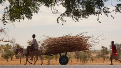 Man & Boy with Donkey Cart near Bandiagara, Mali (Chris G Images) Tags: africa road animal children landscape highway transport donkey burro cart mali touareg tuareg sahel donkeycart bandiagara culturedusahara