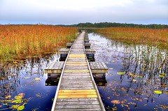 Long bridge (- David Olsson -) Tags: wood bridge autumn lake water nikon sweden gimp karlstad hdr waterlilys postprocessing photomatix d5000 davidolsson