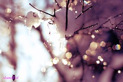 """""""So come with me, where dreams are born, and time is never planned. Just think of happy things, and your heart will fly on wings, forever, in Never Never Land!""""   J.M. Barrie (Peter Pan) (MamaOwlPhoto) Tags: snow tree icicles inmyyard"""