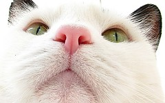 ... (Caroliwen) Tags: cats holland dutch cat canon kat kitty poes