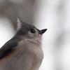 reflect (nosha) Tags: winter usa snow bird beautiful beauty birds newjersey nj mercer february blizzard avian mercercounty pennington 2010 lightroom 105mmf28 nosha nikoncorporation nikond300 snopocalypse 1800secatf56 snomaggedon