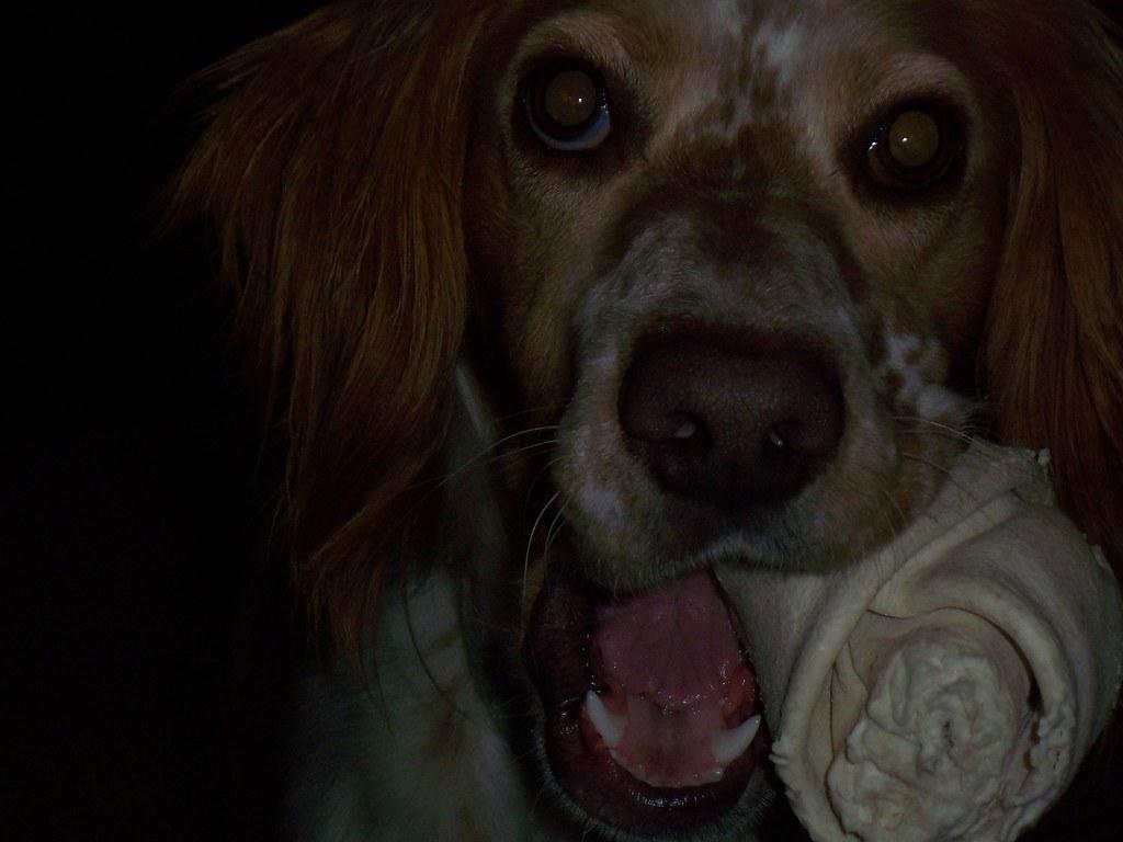 Image Result For Dog Training Sounds