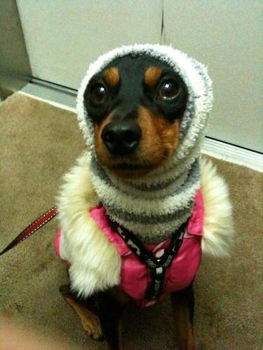 雪の日の散歩もなかなかいいね。