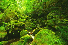 The valley stream by which green lovely is  summer  1 (chikaraamano) Tags: green lovely moss water stones outdoor rocks mountain valley creature stream flow ravine finally youngleaves summer upstream charmed repeatedly light freely flows