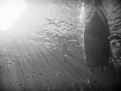 Return to Base (Eric W_) Tags: boat scuba diving maui lookingup molokini blackwhitephotos mikesevernsdiving