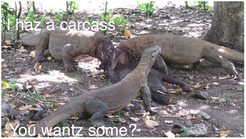 I haz a carcass